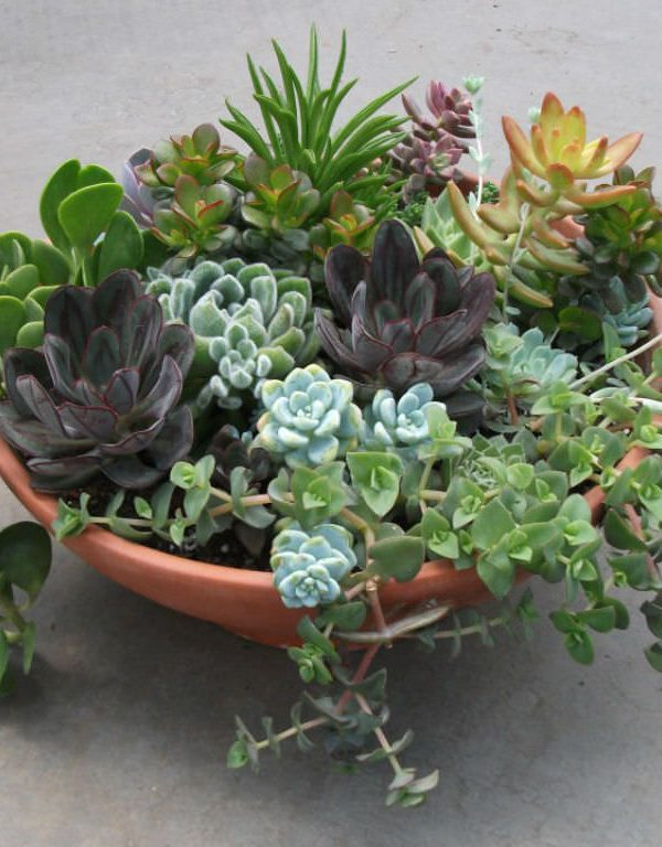 Sulu Meyveler: Unutkan Bahçıvanlar için Mükemmel Bitkiler Sukulent