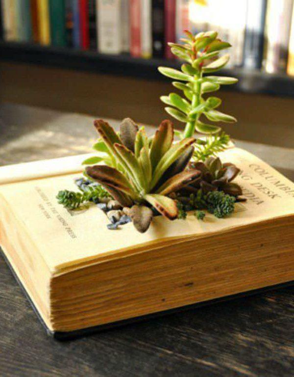Succulents Sukulent İçin Kendi Kitap Ekicilerinizi Nasıl Yapabilirsiniz?