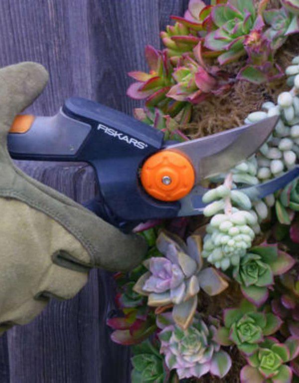 Succulents Sukulent Nasıl Kesilir