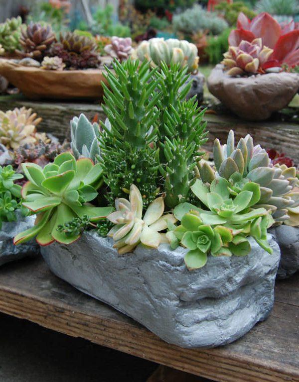 Succulents Sukulent Yetiştirmek İçin Yararlı İpuçları