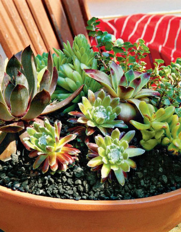 Succulents Sukulent Yetiştirmek İçin İpuçları ve Püf Noktaları