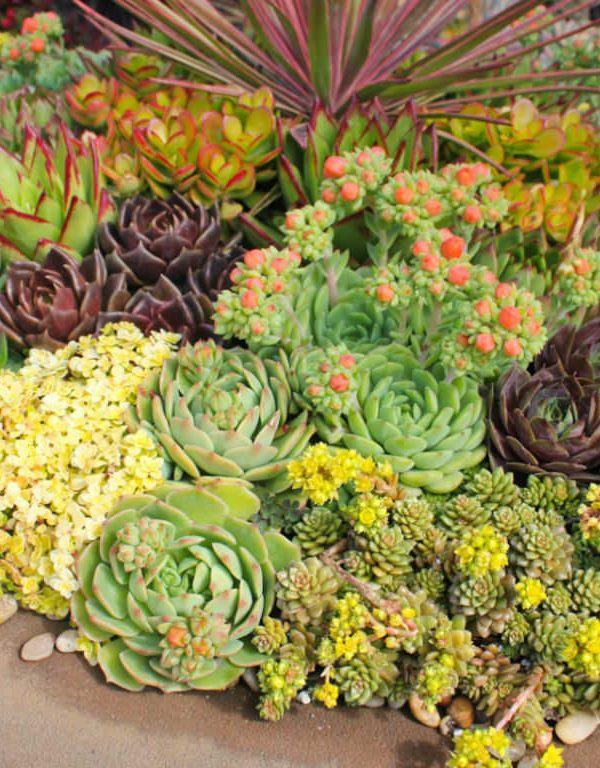 Succulents Sukulent ile Başarı İçin 3 İpucu