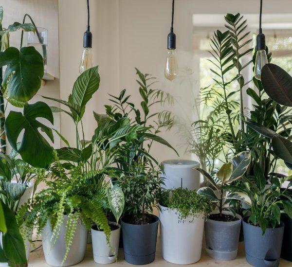 İç Mekanda Büyümek İçin En İyi 5 Çöl Bitkisi