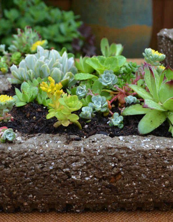 Succulents Sukulent için Hypertufa Kapları Nasıl Yapılır