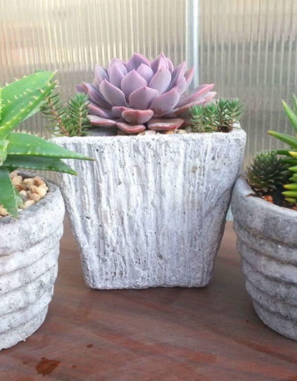 Succulents Sukulent Yetiştirirken Kaçınılması Gereken 6 Yaygın Hata