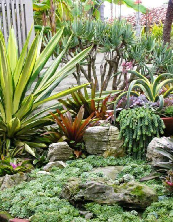 Sukulent Etli Bir Bahçe Nasıl Yetiştirilir