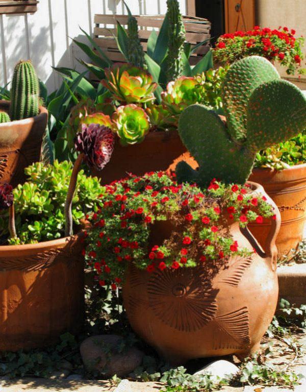 Bakımı Kolay Ev Bitkileri Sukulent için Kaktüsleri ve Sulu Meyveleri Deneyin