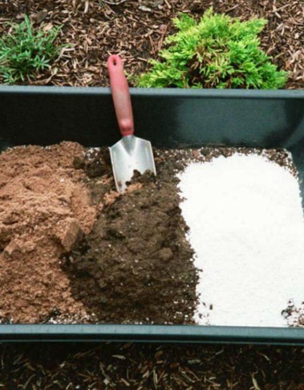Etli Bitkiler için Ev Yapımı Saksı Toprağı Sukulent