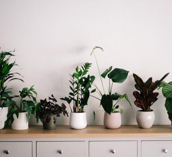Güneşe İhtiyaç Duymayan En İyi İç Mekan Bitkileri