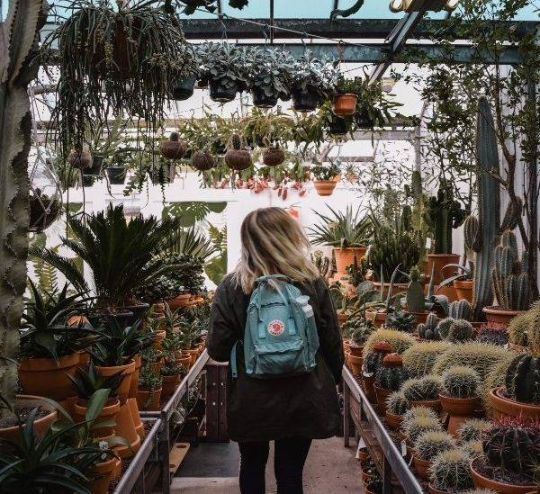 İç Mekan / Dış Mekan Kaktüs Bahçeniz İçin En İyi 20 Kaktüs Türü
