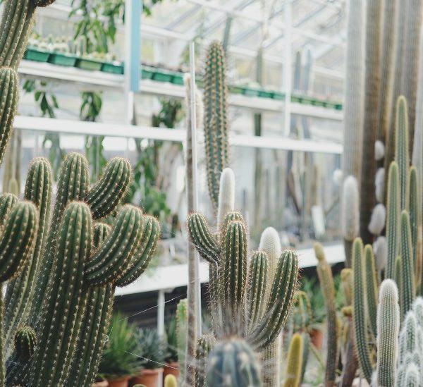 Mükemmel Kaktüs Bahçesi için 7 Adım