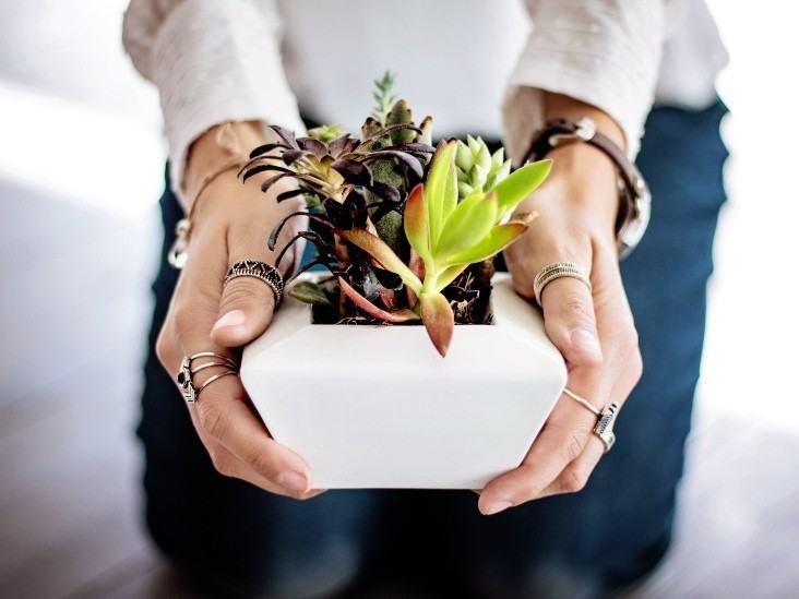 Succulents Care Yeni Başlayanlar İçin 15 Temel İpucu