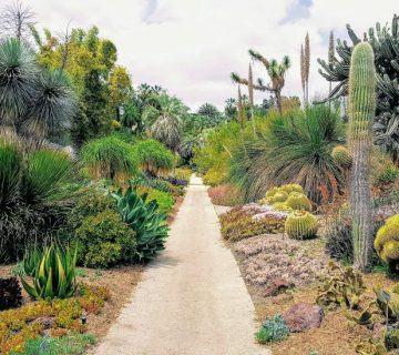 Mükemmel Bir Kaktüs Bahçesi İçin Harika 5 İpucu